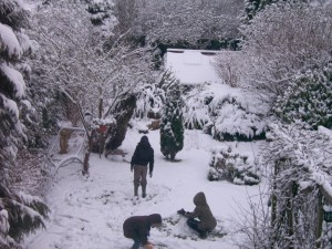 protect_your_garden_in_cold-weather