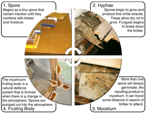how-to-identify-dry-rot